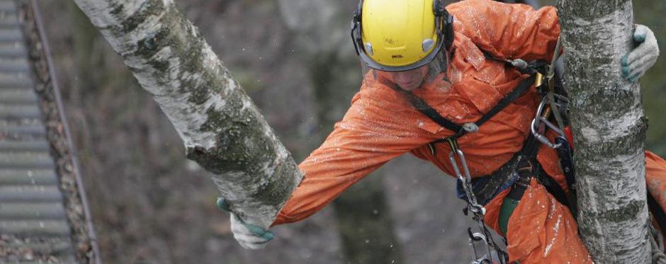 спиливание деревьев частями