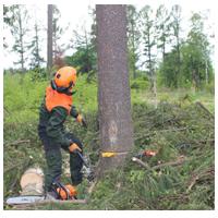 спиливание деревьев на участке