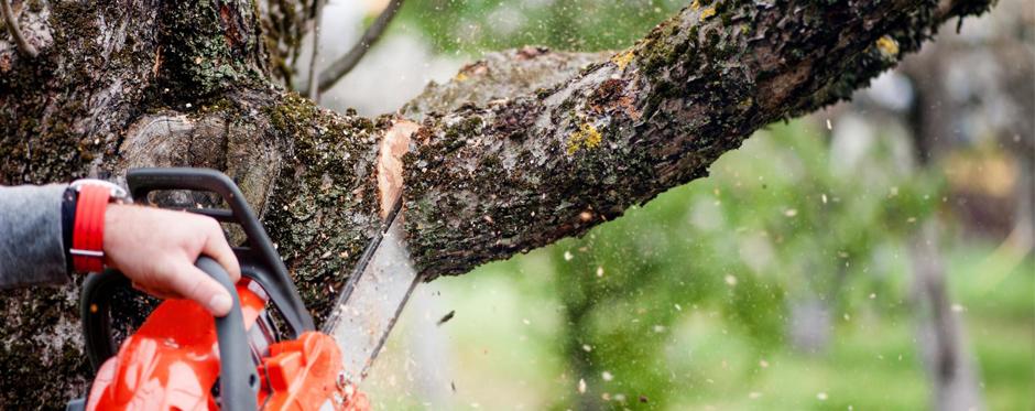 спиливание ветки у дерева