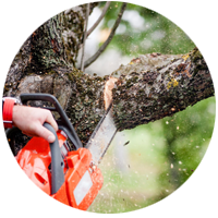 спиливание веток деревьев