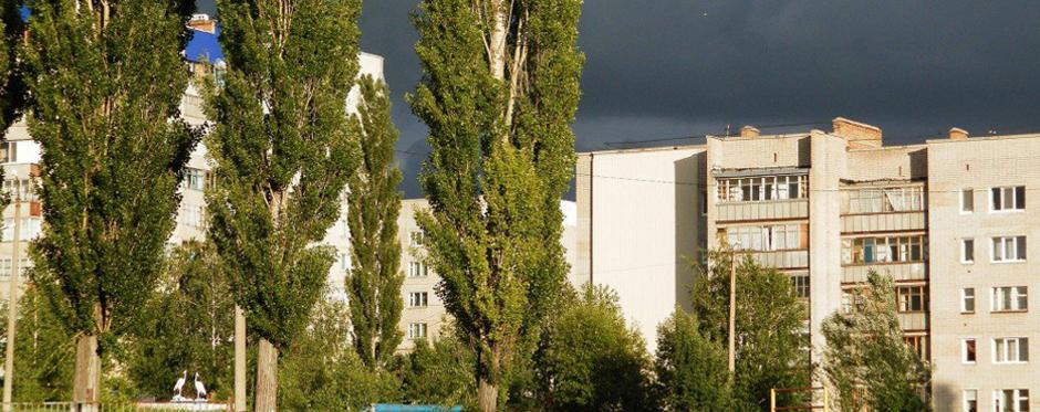 тополя в Москве