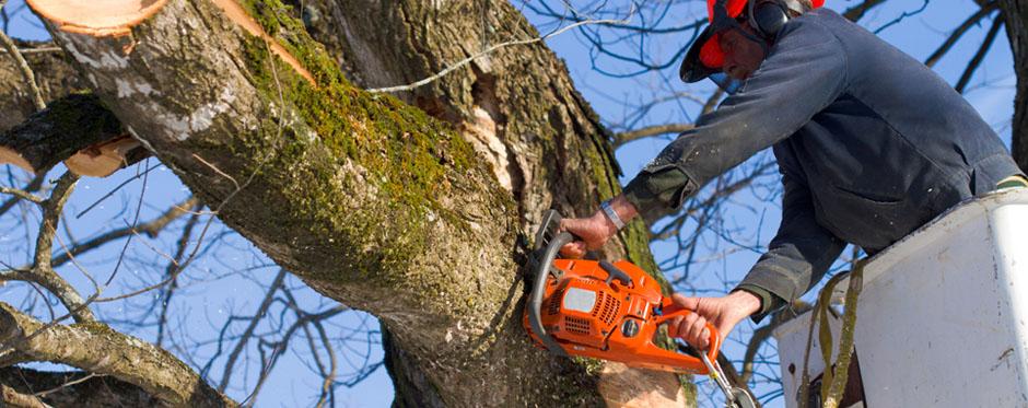 валка аварийного дерева