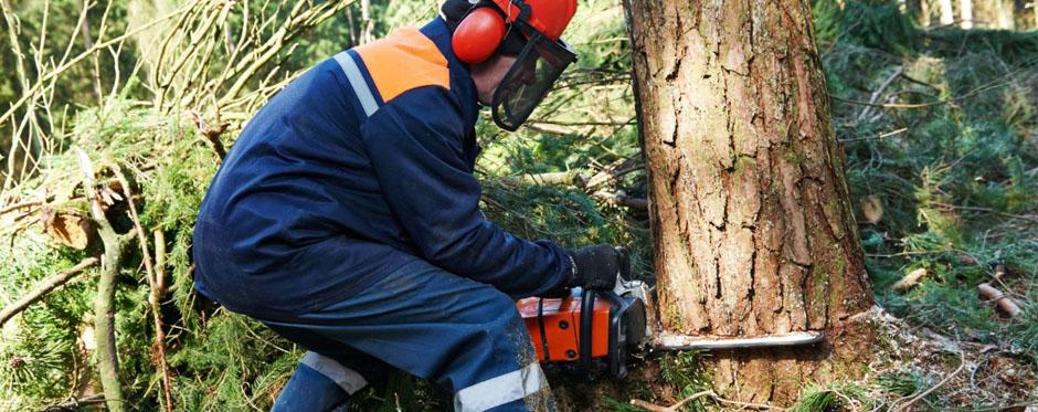 валка деревьев с корня