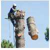 валка опасных деревьев частями с завешиванием