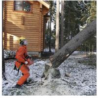 валка опасного дерева