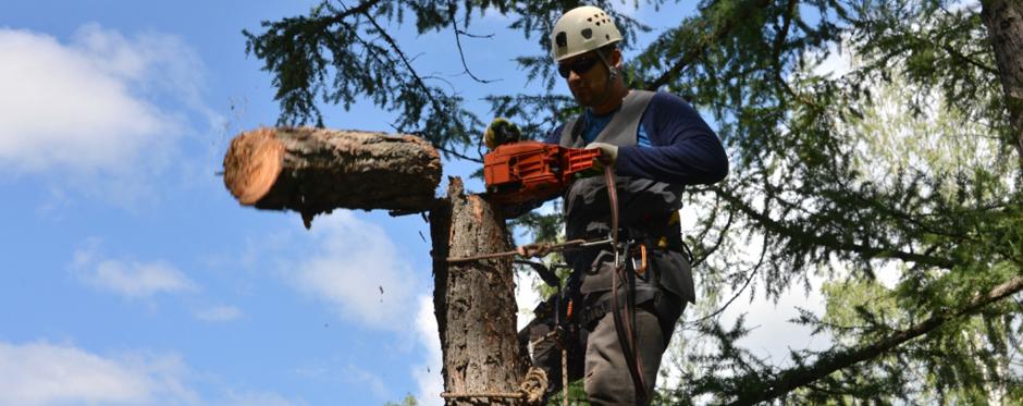 валка опасного дерева частями