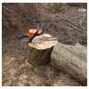 валка дерева с оставлением пня