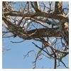 ветки дерева