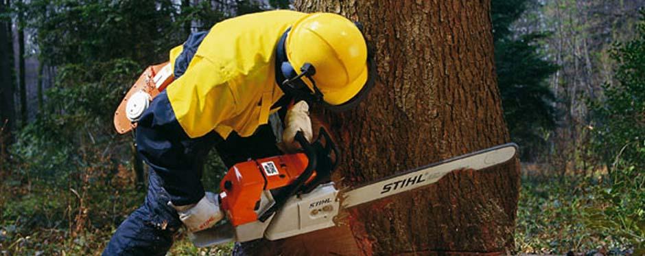 вырубка аварийных деревьев