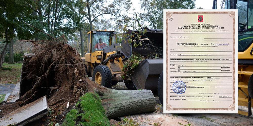 вырубка деревьев в городе и порубочный билет