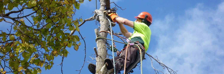 спиливание верхушки дерева