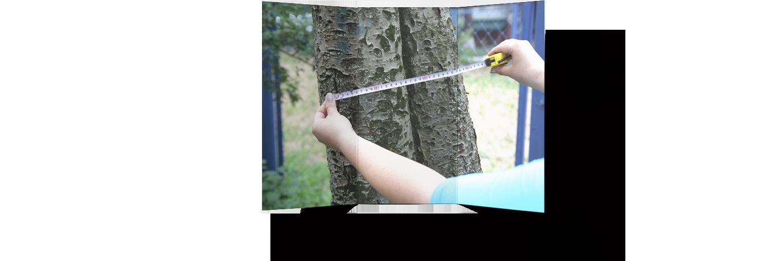 осмотр дерева