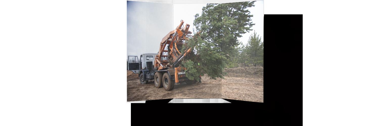 пересадка больших деревьев